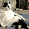 猫カフェと深夜規制